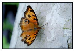 butterfly park 5 by indryana