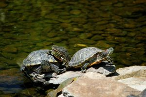 Four on the Rocks by silverlakephotos