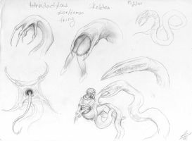 Tetradactylus sketches by KhelaAtra