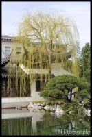 Portland Chinese Gardens VI by davidmoakes