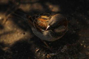 Birdie by FloRidity