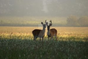 Dear Deer by exarobibliologist
