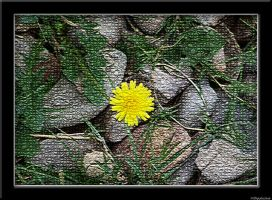 Flower in the Rocks by NINperfection
