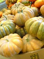 Fairy Tale Pumpkins by sketchydreamerstock