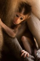 Little Macaca - Hold on tight by frankylie