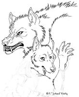 Wolf and Coyote sketch by jidane