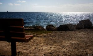 bench by wolmers