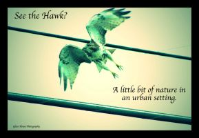 The Red-Tailed Hawk by GlassHouse-1