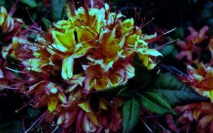 Daytime Flower in the Night by Booler