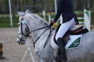 Grey Horse - Show jumping stock MHS 1.13 by MagicLecktra