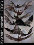 Bats 002 by poserfan-stock