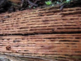 rotting wood 3 by kayas-stock