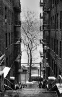 A tree grows in The Bronx... by Ron-Douglas