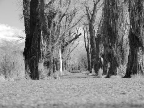 Down the Road in Black and White by bowencormac