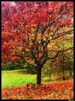 Tree of Colour by Clair3Su3