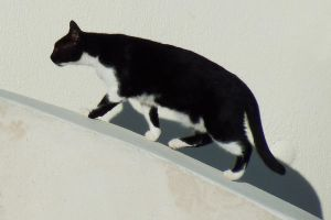 Cat on a curve - Cyclades by wildplaces