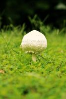 The Lone Fungus by pinkfloydsrainbow