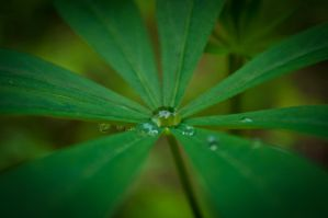 GREEN... With raindrops. by TheUniphotoghrpher
