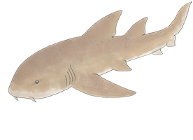 Nurse Shark by TotalWeirdo666