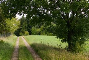 Idyllic Path through Meadows and Woods by LuDa-Stock