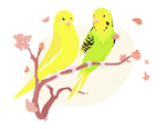 My Budgies by doggieoh