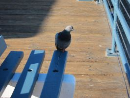 A Perching Pigeon by xXxTaintedSoulxXx