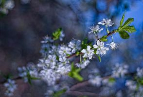 spring ... ing by PatiMakowska