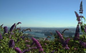 Flowery Vancouver by IvanAndreevich