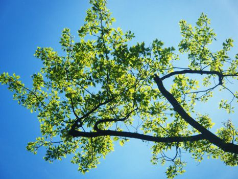 branching into the blue, by promise-you-this