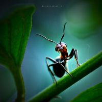 The Wood Ant by DREAMCA7CHER