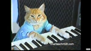 Keyboard Cat by MarioWarioLuigiWalui