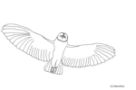 Owl LineArt by MEWillow