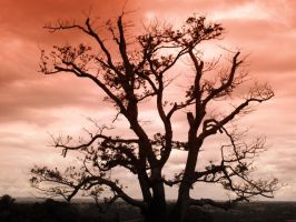 Tree on Red Sky by MichelLalonde