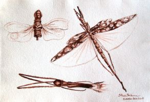 insects 2 by dovespirit