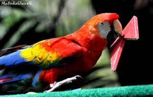 Macaw game by MadinkaClaireC