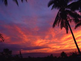++ paradise + sunset sorbet by charmbuster