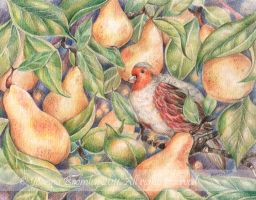 Partridge in a Pear Tree 2011  by JoannaBromley
