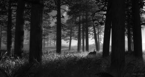 Forest Through the Trees BW by MerlinsArtwork