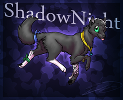 ShadowNight by Feline-Basilisk
