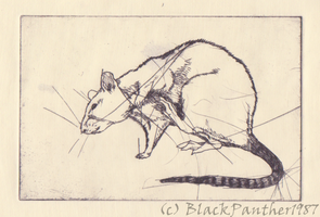 copper engraving - rat by YamiPanther