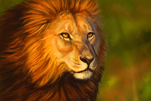 Lion Speedpaint by Maquenda