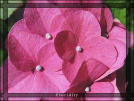 Floridity by benilo