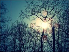 Sun from the branches... by fuzzy-blue-light