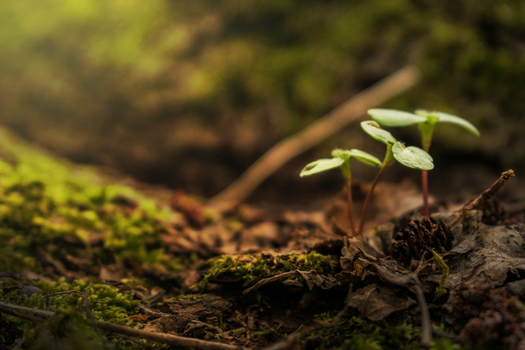 Little plants in the light by Arelias17