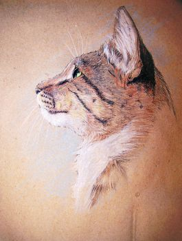 Tabby cat by Concini
