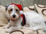 Christmas dog by Geater