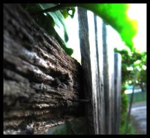 Old Fence by Scruggs