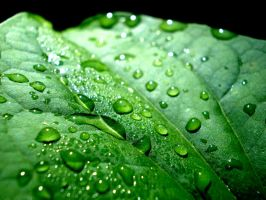 Water Droplets by ShottysniperZ