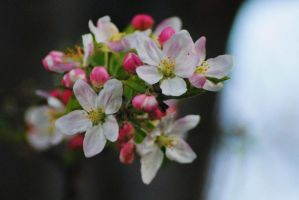 Spring Apple 1 by Tyyourshoes