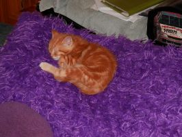 An Orange Baby On A Purple Pillow by MidnightMary13